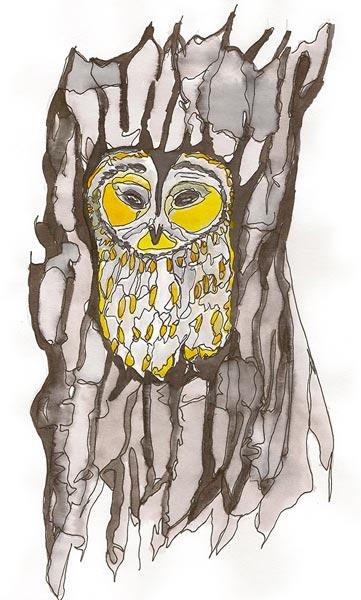 Hiboux - Illustration - Isabelle Milléquant Surr