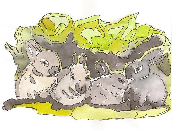 Lapins - Illustration - Isabelle Milléquant Surr