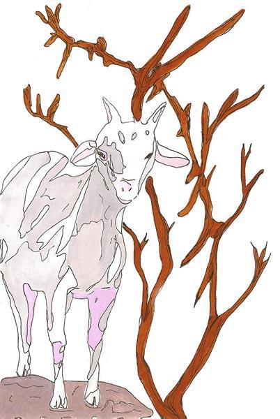 Chèvre - Illustration - Isabelle Milléquant Surr