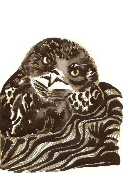 L'oiseau des fables - Illustration - Isabelle Milléquant Surr