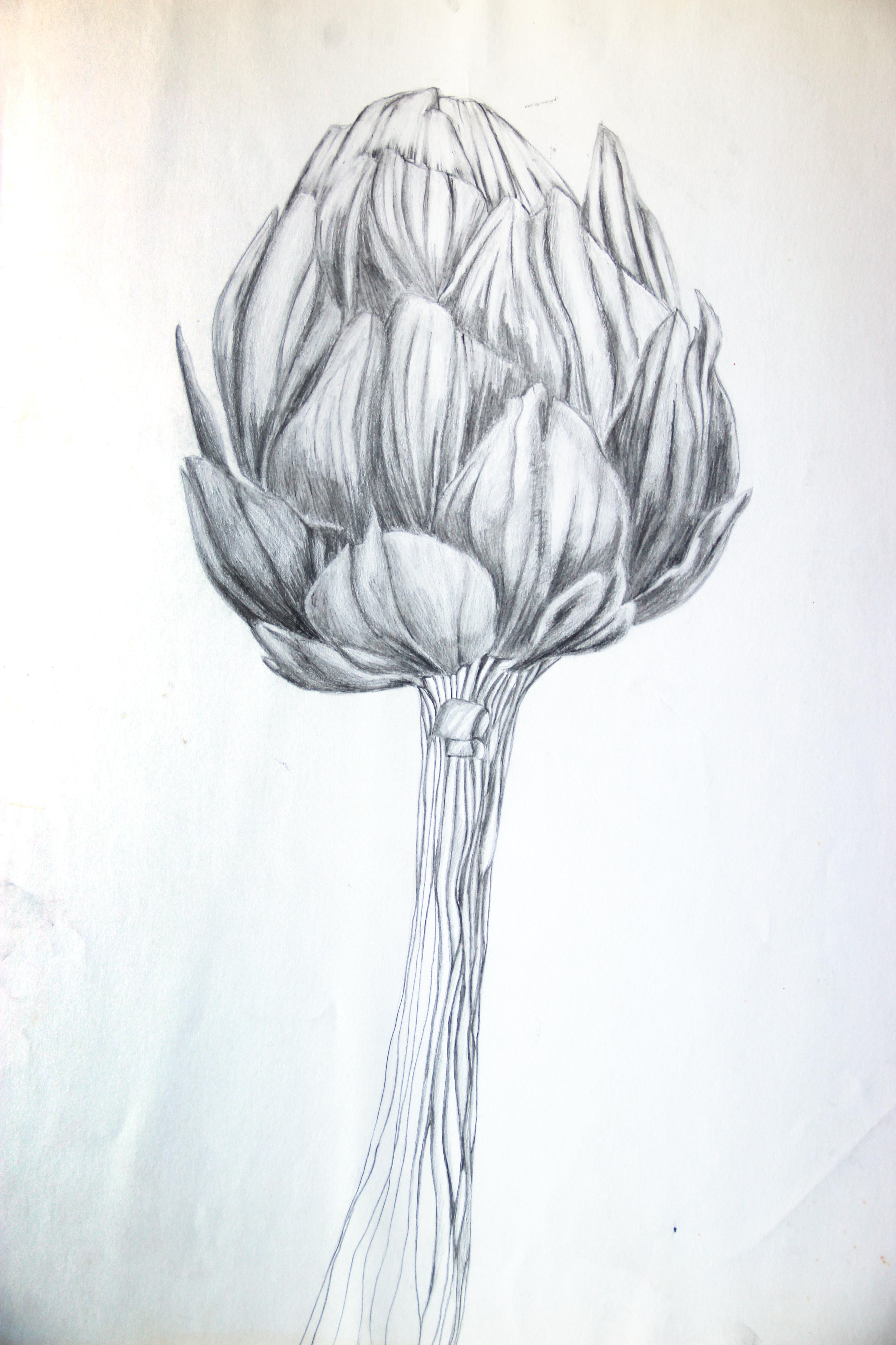 Artichaut - Croquis - Isabelle Milléquant Surr
