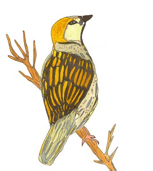 Oiseau - Illustration - Isabelle Milléquant Surr