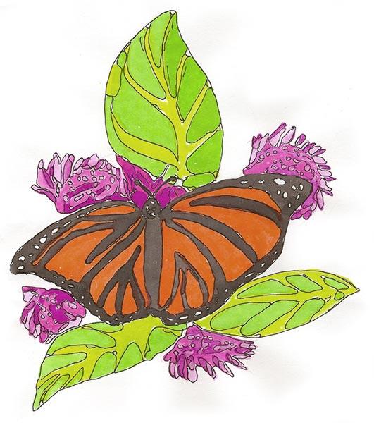 Papillon - Illustration - Isabelle Milléquant Surr